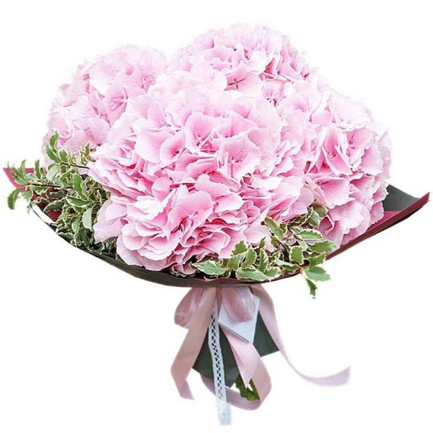Гортензия розовая