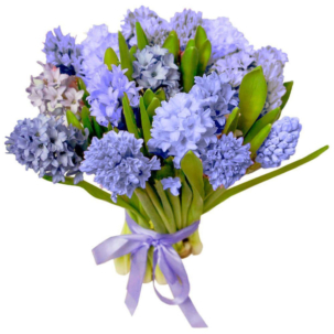 Гиацинт синий