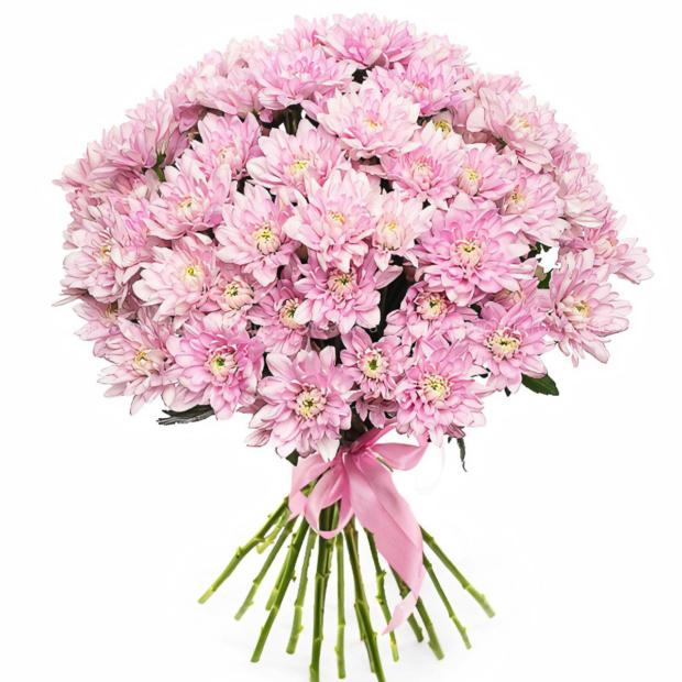 Хризантема кустовая розовая