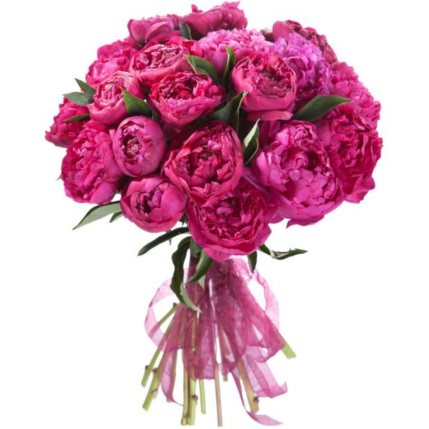 Пион темно розовый