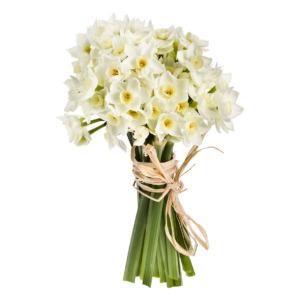 Нарцисс белый